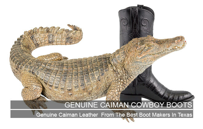 Genuine Caiman Cowboy Boots - Featured